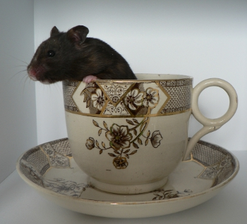 Gertie in a giant teacup
